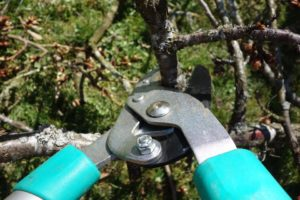 Close Up View of Pruning Clippers
