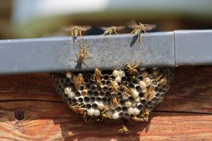 Statesville Wasp Nest on Home Exterior