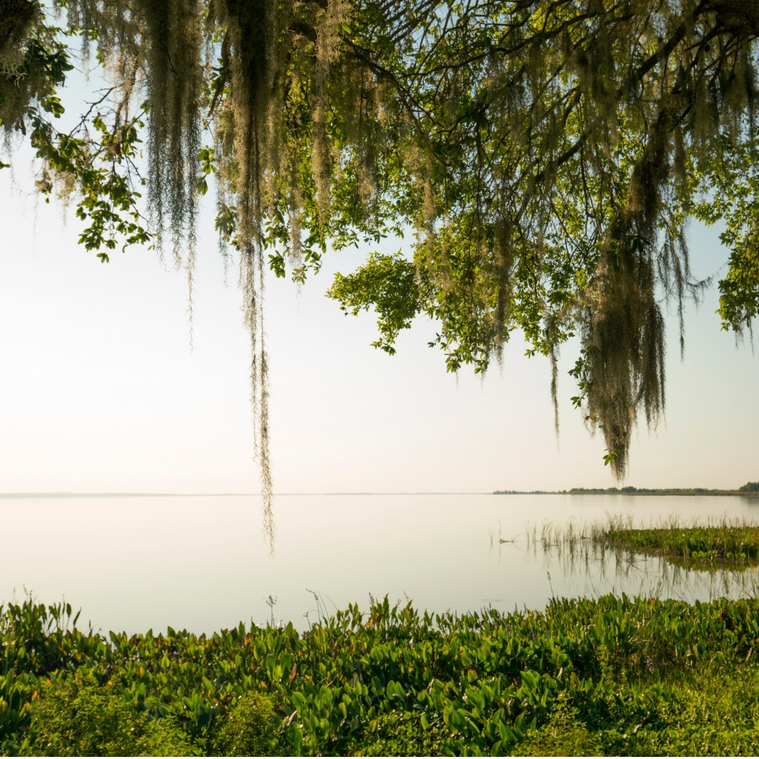 Lake Apopka in Apopka, FL