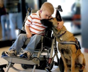 "How Do You Know if it is a ""Real"" Service Dog?"