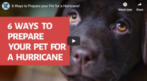 YouTube Preview - Pets and Hurricanes