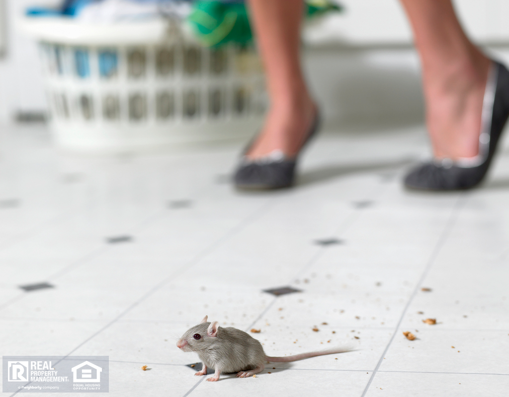 A Common Mouse on the Kitchen Floor