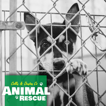 Animal Shelters and Rescue Organizations in Collin & Denton Counties