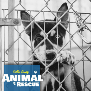 Animal Shelters and Rescue Organizations in Dallas County