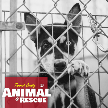 Animal Shelters and Rescue Organizations in Tarrant County
