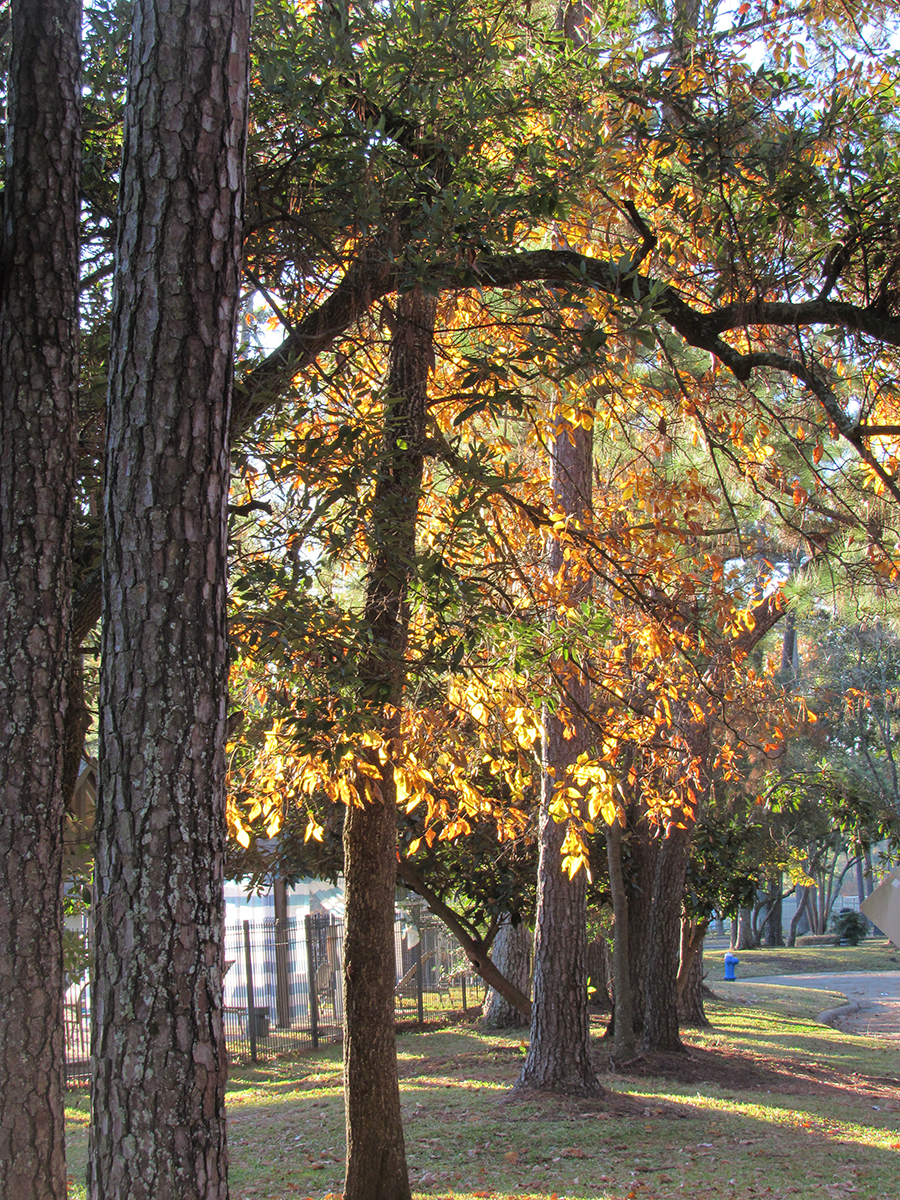 Kingwood Livable Forest Walkway