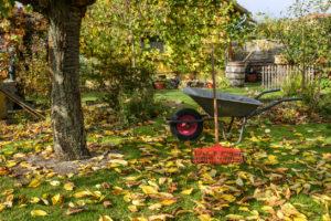 Wheelbarrow and Rake for Fall Yardwork