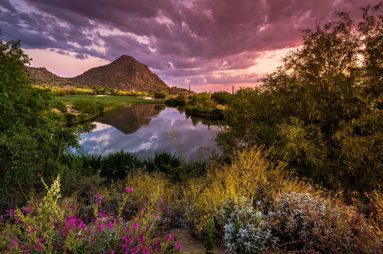 Arizona Landscape in full bloom