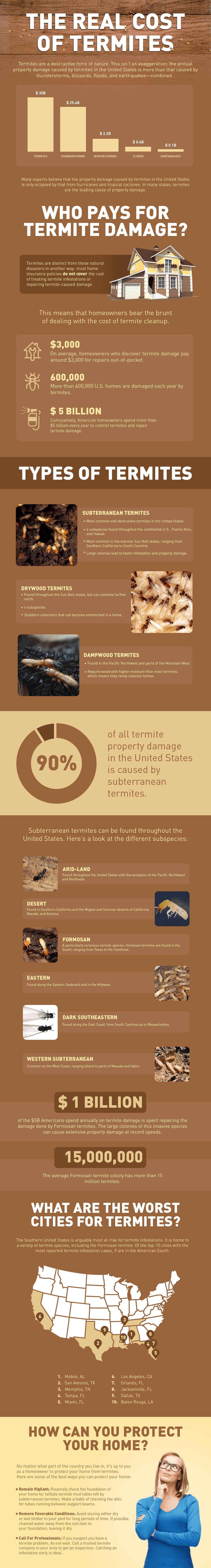 the real cost of termites infographic