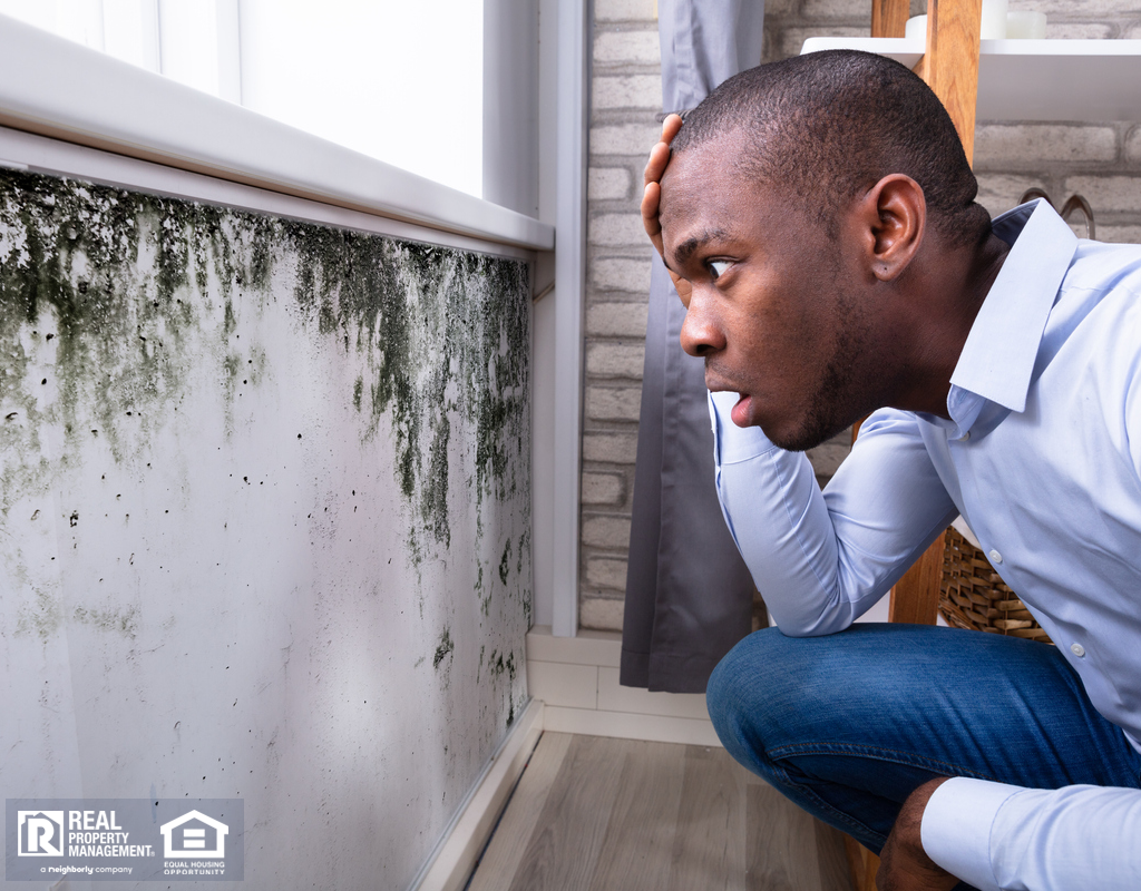 Southport Tenant Looking at Mold in His Rental Home