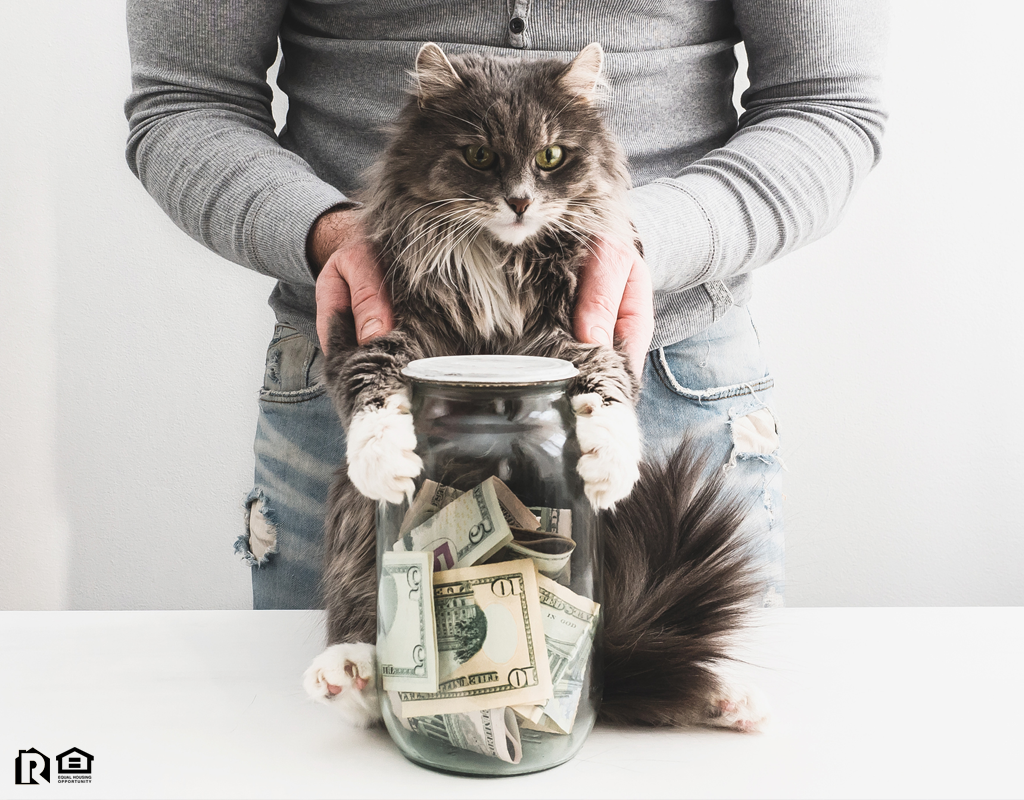 Denton Tenant with a Piggy Bank and a Cute Cat