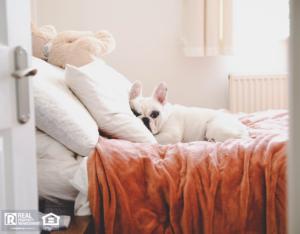 White French Bulldog Sleeping on Bed in Westlake Village Rental
