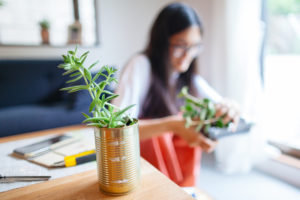 Peterson Woman Repurposing Metal Cans for Planters on her Desk
