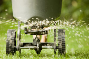 Fertilizer Pellets Spraying onto a Green Lawn