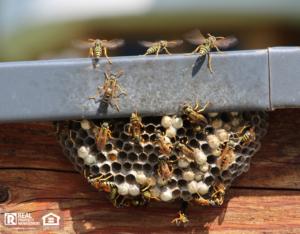 Manhattan Beach Wasp Nest on Home Exterior