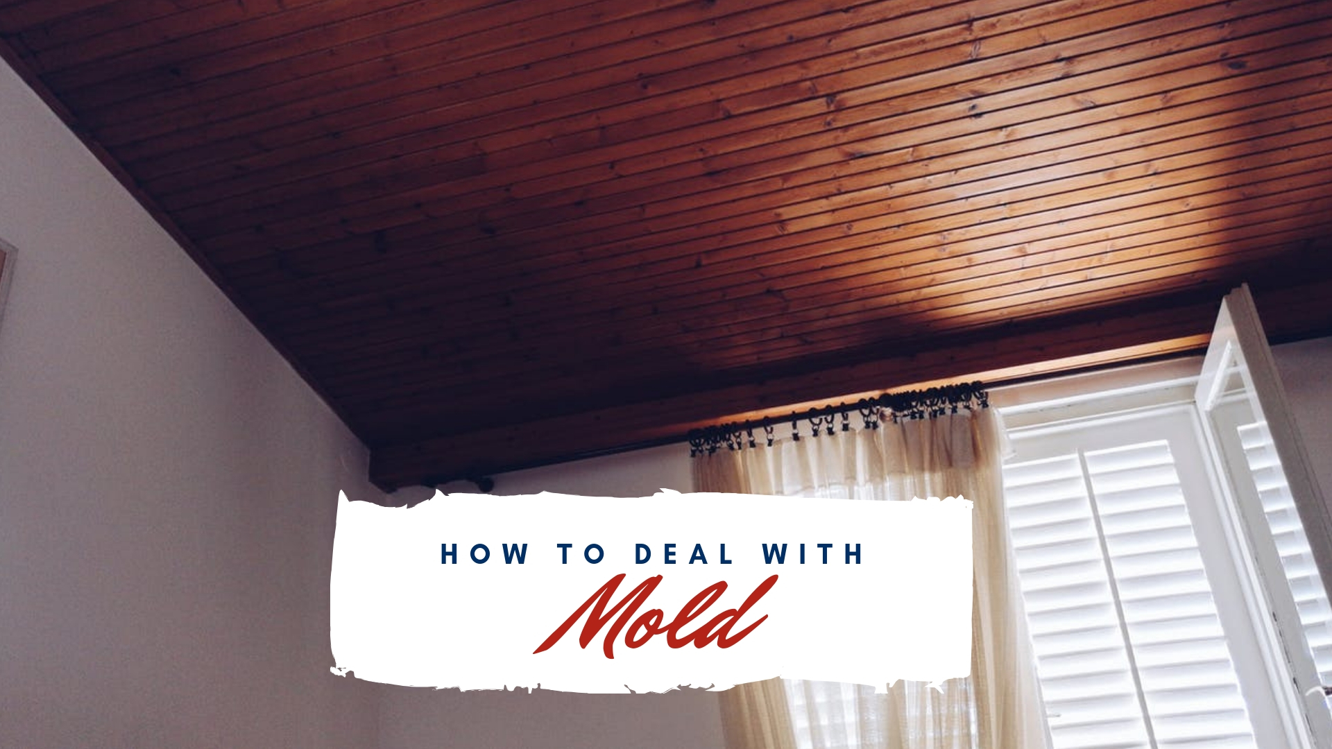 How to deal with mold in your rental property real - How to deal with mold ...