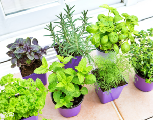 Herb Garden on a Windowsill