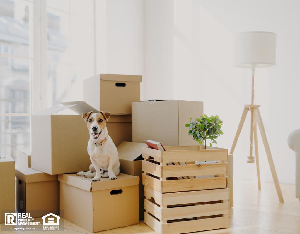 Bangor Dog Sitting on Moving Boxes