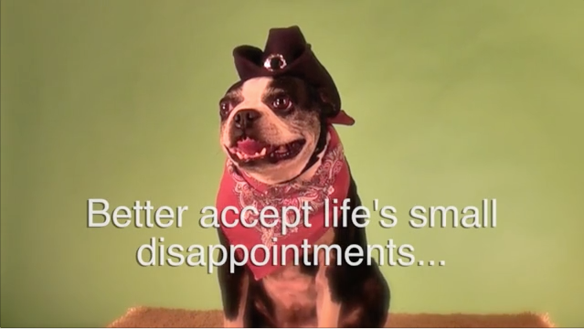 New Years (Smiling Dog) Resolutions for Dogs