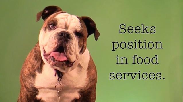 Labor Day Resume - Smiling Dog