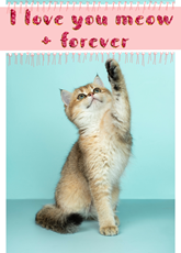 Meow and Forever