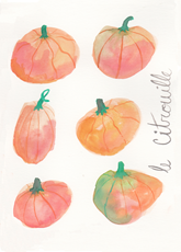 Pumpkin Study