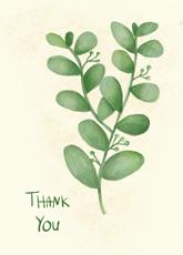 Thankful Succulent
