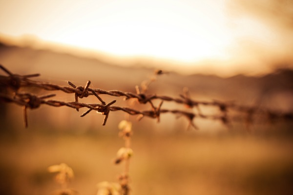 barbed wire shot from picjumbo
