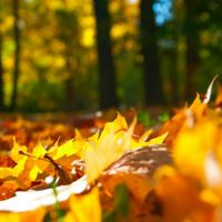 Fall Camping Tips When Camping with Kids