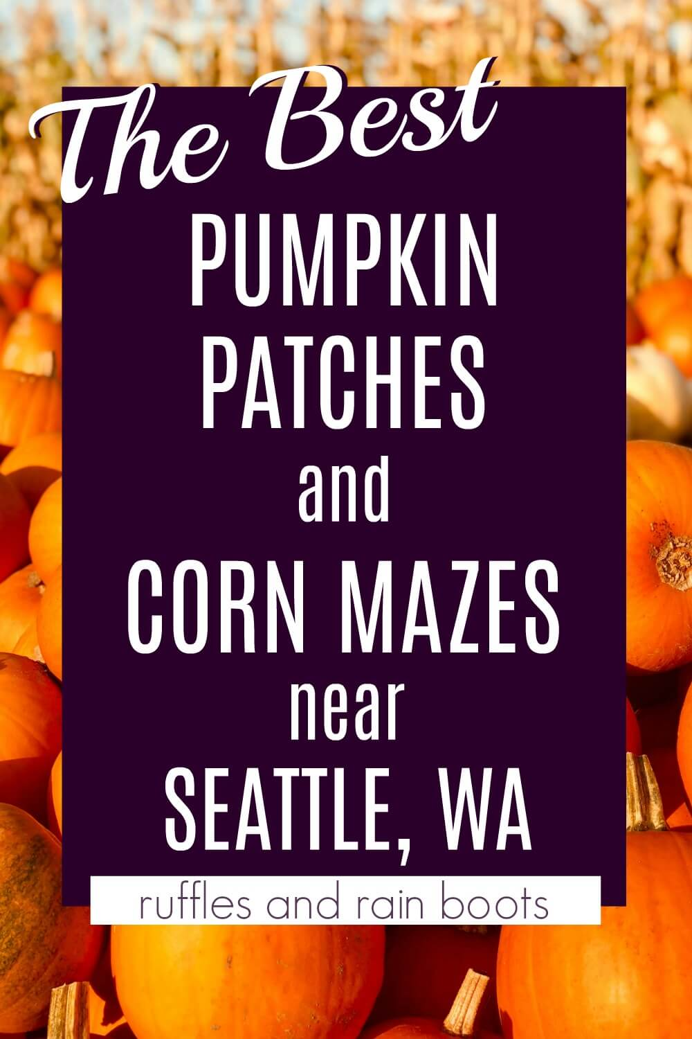 pile of pumpkins for fall with overlay with text which reads the best pumpkin patches and corn mazes near Seattle Wa