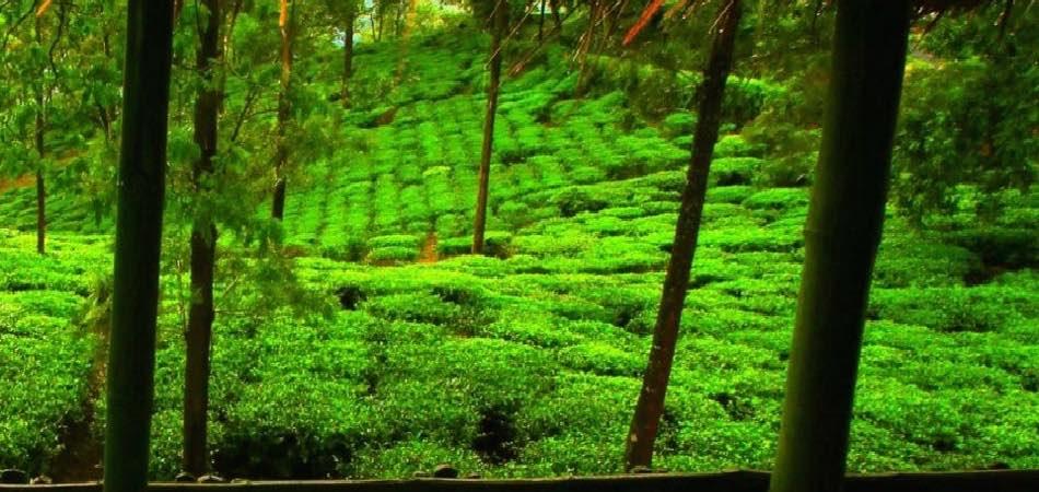 Wayanad Plantation Experience