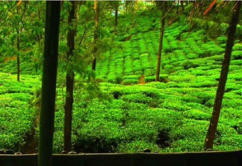 Wayanad_Rustik_Travel