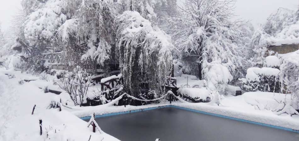 SnowCappedTrees_Rustik_Travel