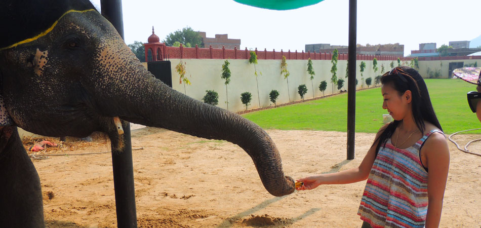 Rustik_Travel Living_it_up_at_Magnificent_Jaipur_Elephant