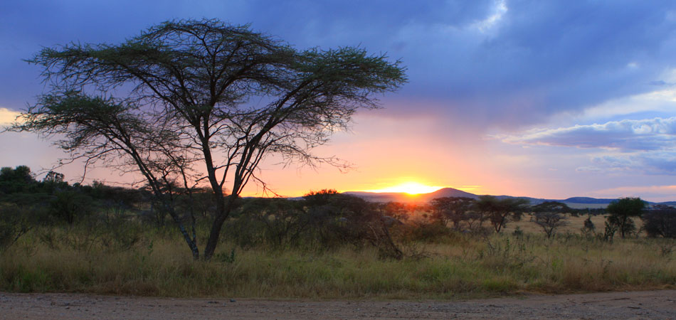 African Safari by Rustik Travel