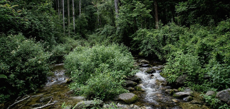 River Arunachal Pradesh