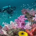 Andaman Diving_Rustik Travel