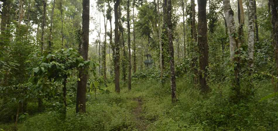 Coorg Tour_Rustik Travel