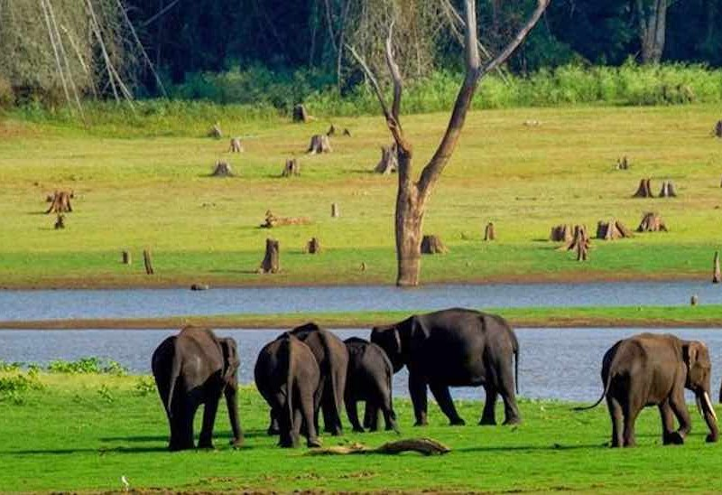 Kabini_Rustik Travel