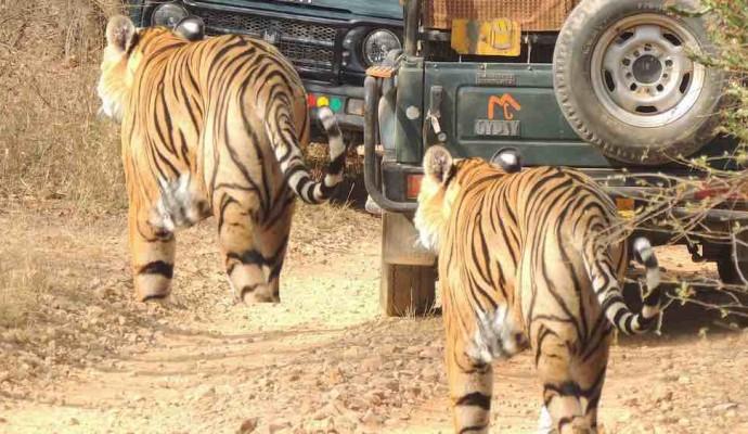 Ranthambore Getaway_Rustik Travel