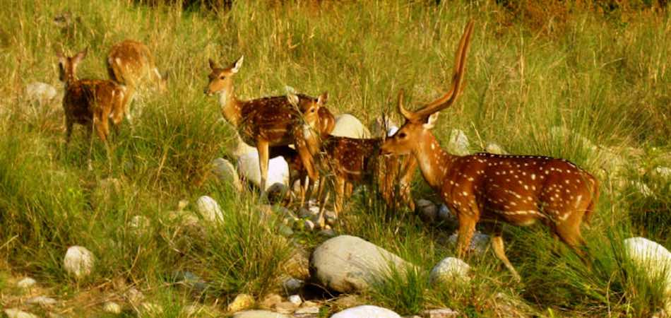 Corbett National Park_Rustik Travel