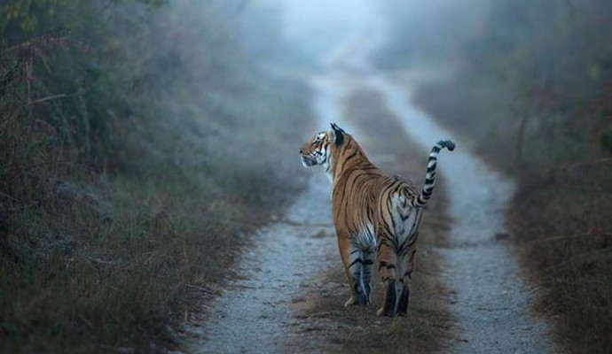 Corbett National Park_Rustik Travel
