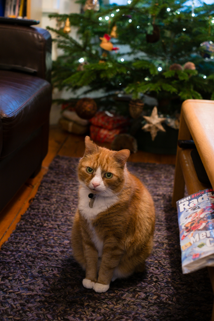Widget disapproves of Christmas