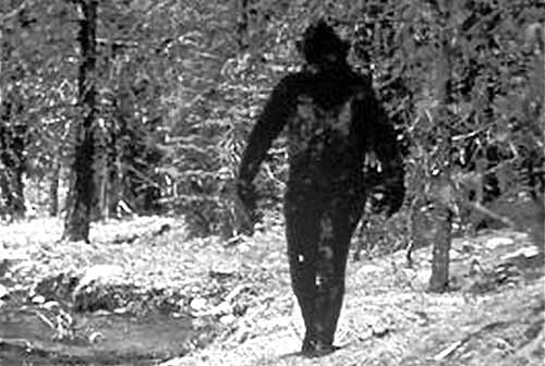 Photograph of a Bigfoot