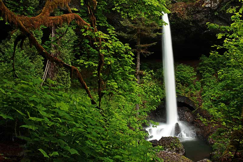 Photograph of North Falls, Silver Falls State Park