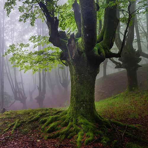 Otzarreta Forest, Bizkaia, Spain
