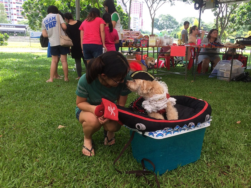 Dog party in Singapore