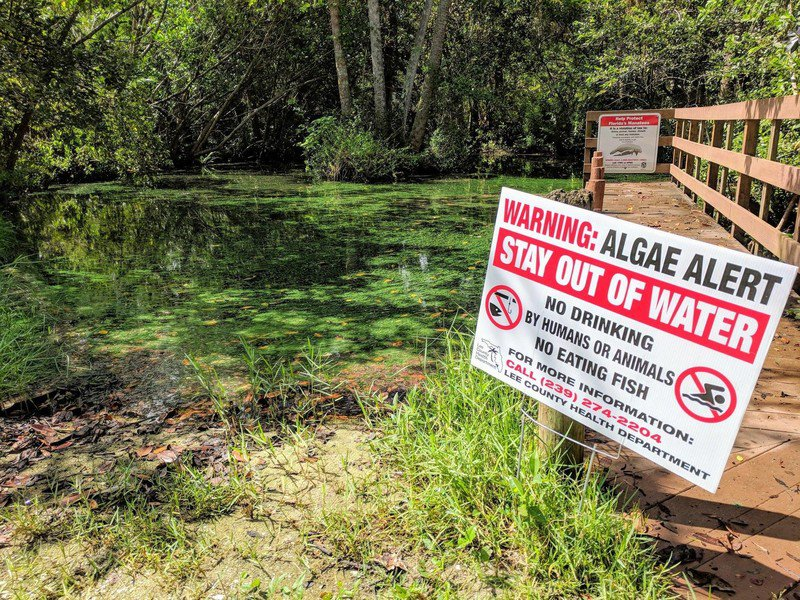 Algal bloom alert