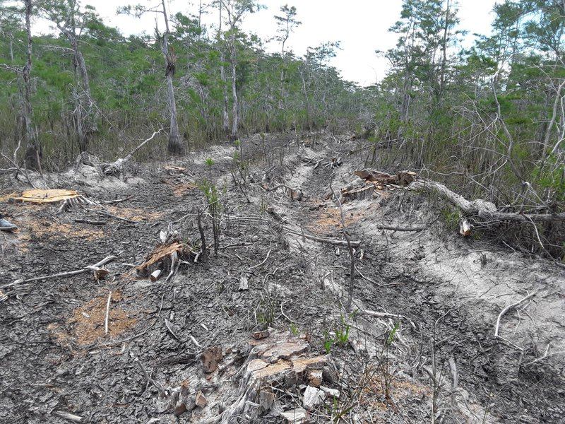Big Cypress National Preserve oil exploration damage