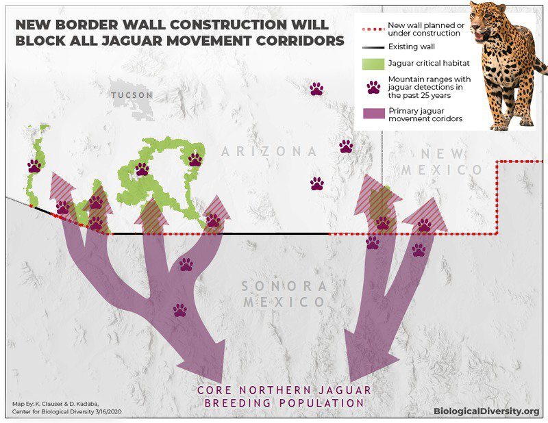 New Border Wall Segments Would End U.S. Jaguar Recovery